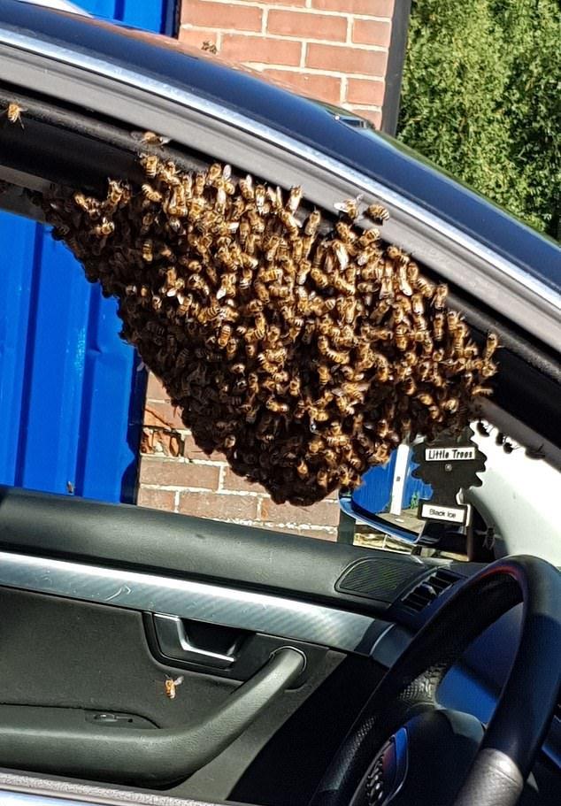 Рой пчел выбрал машину в качестве нового улья