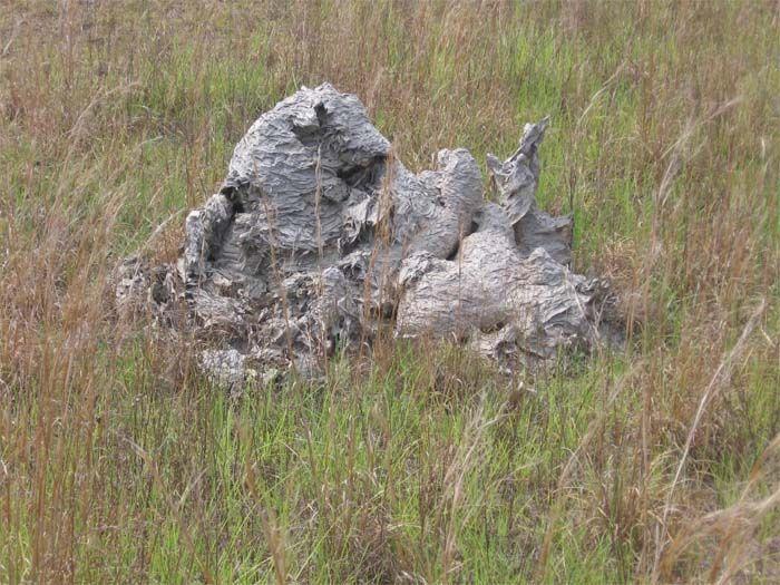 Осы сооружают огромные гнезда в штате Алабама