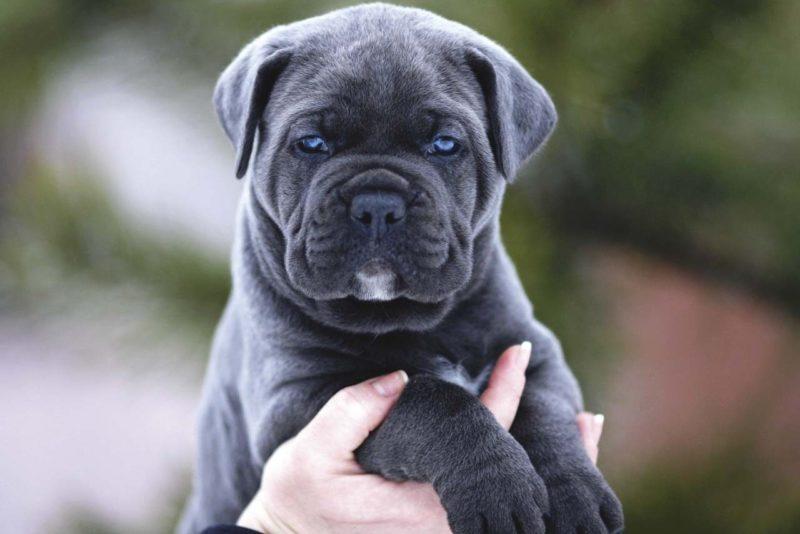 Учёные выяснили возраст максимальной миловидности щенков