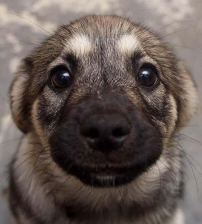Милые и очаровательные щенки заряжают позитивом