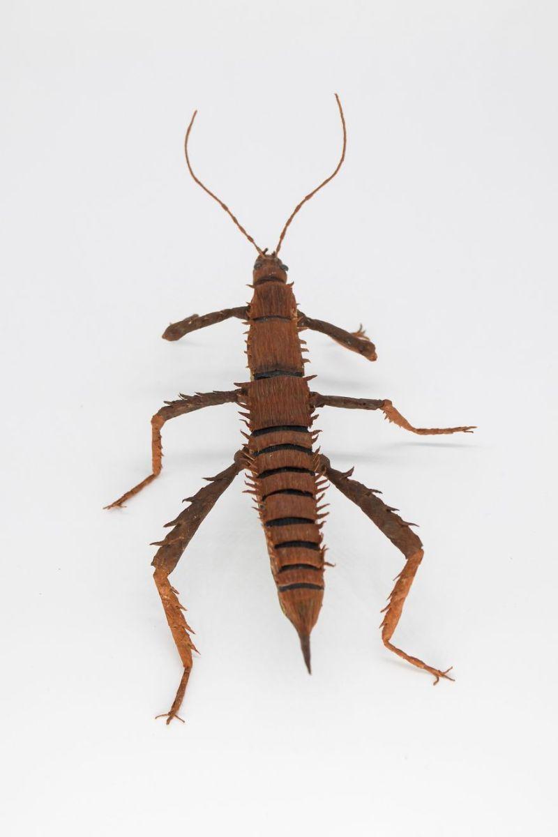 Невероятно реалистичные насекомые и растения из бумаги