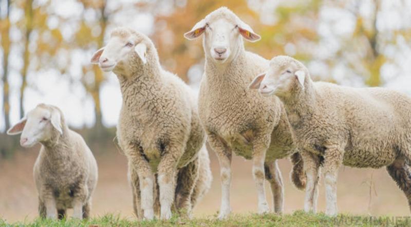 Шокирующие и невероятные процедуры для животных