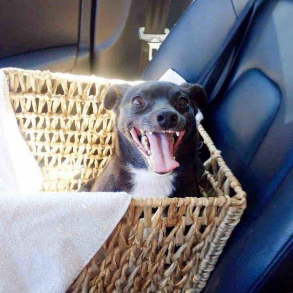 Счастливые собачки, которых забрали из приюта и везут домой