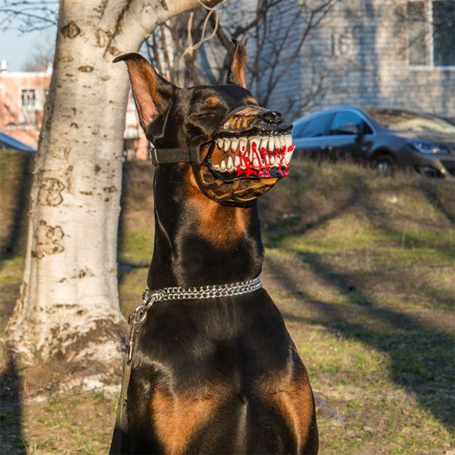 Зубастый намордник, превращающий даже милую собачку в оборотня