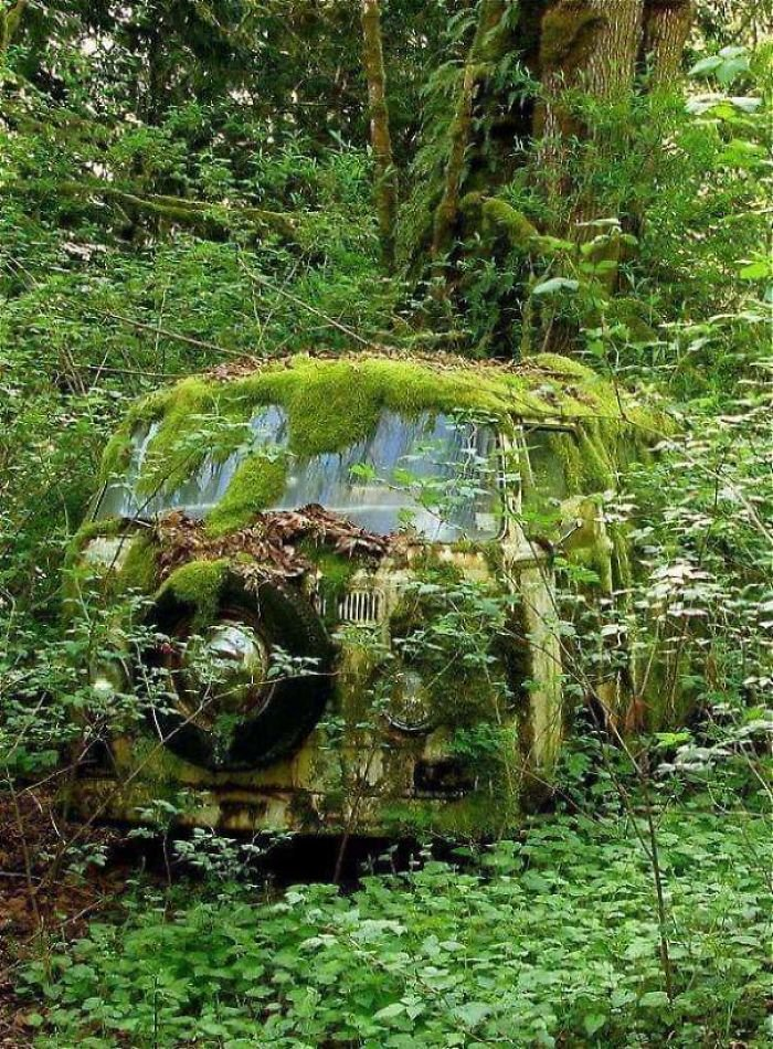 Снимки демонстрируют, как природа берёт своё обратно
