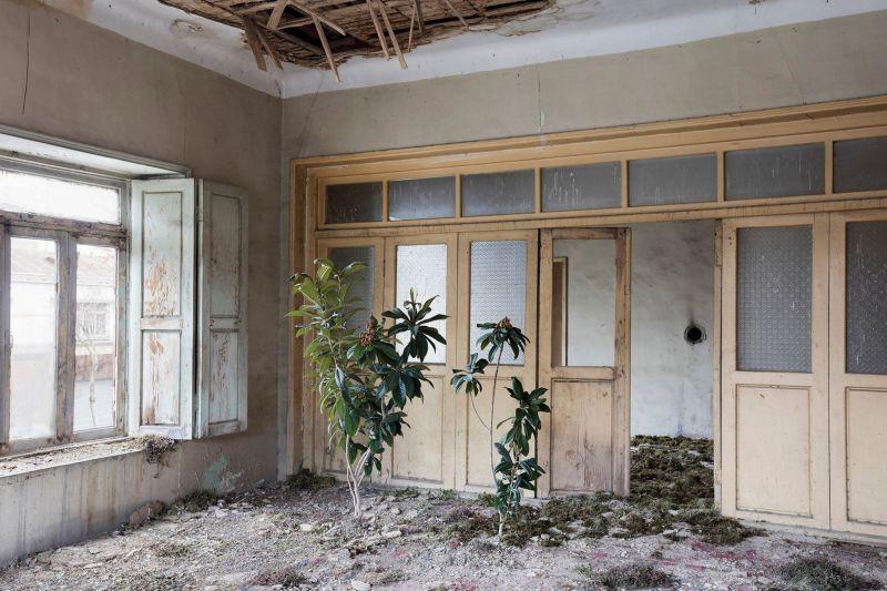 В заброшенных особняках Тегерана обосновалась природа