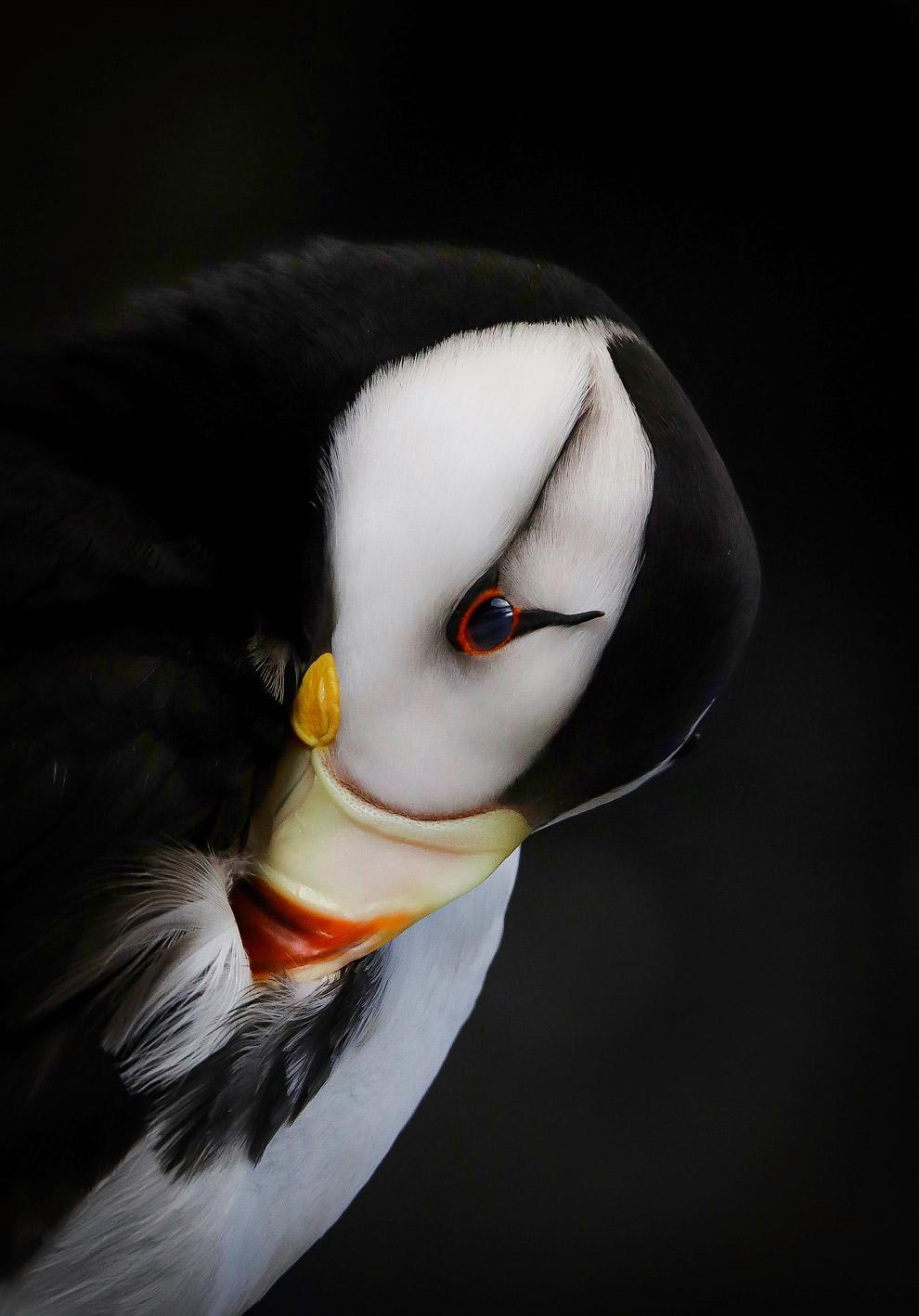 Снимки с птичьего конкурса Audubon Photography Awards 2019