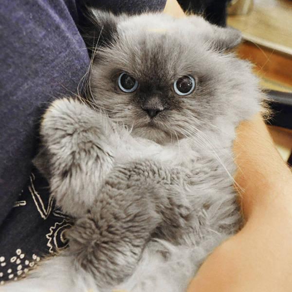 Котики, которым не нужны все эти обнимашки