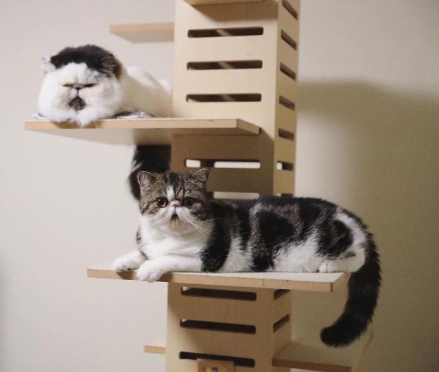 Очаровательный кот с галстуком