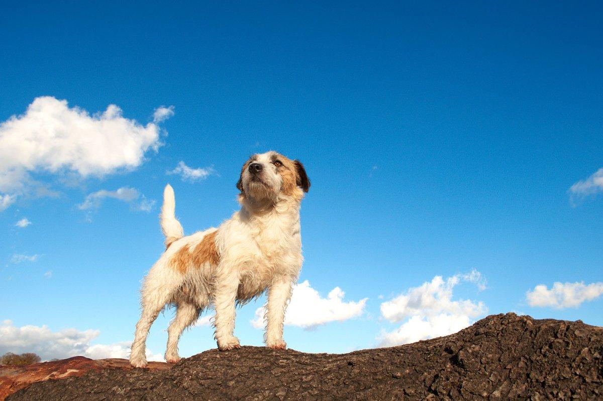 Ученые определили веские причины, почему стоит завести собаку