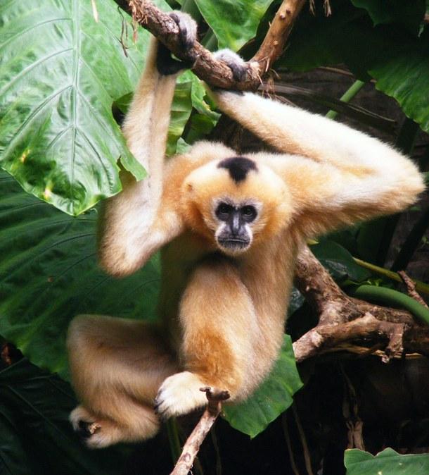 Исчезающие животные, которых почти невозможно встретить в дикой природе