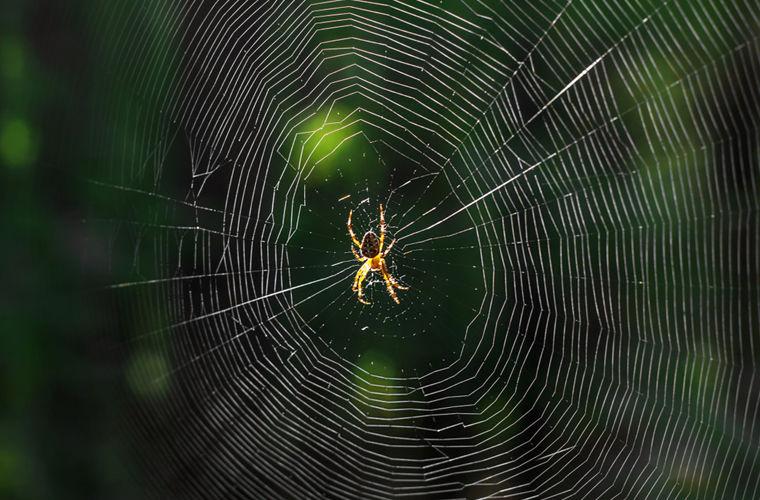 Почему паук не прилипает к своей паутине