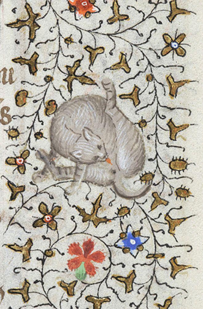 Средневековые монахи рисовали кошек, вылизывающих себя под хвостом