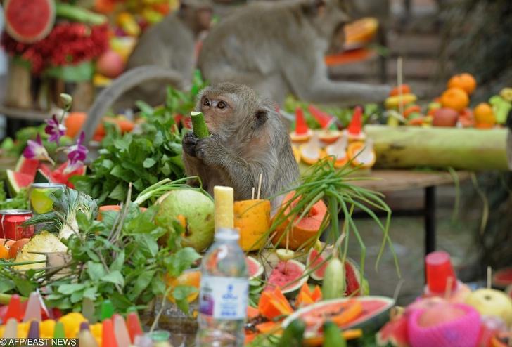 Удивительные вещи, которые можно увидеть только в Таиланде