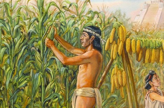 Растения, которые изменили ход истории