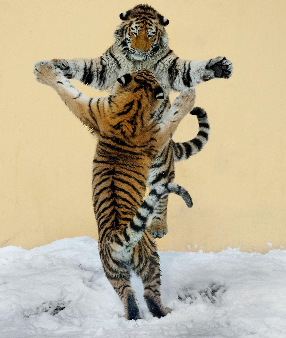 Танцующие животные в объективе