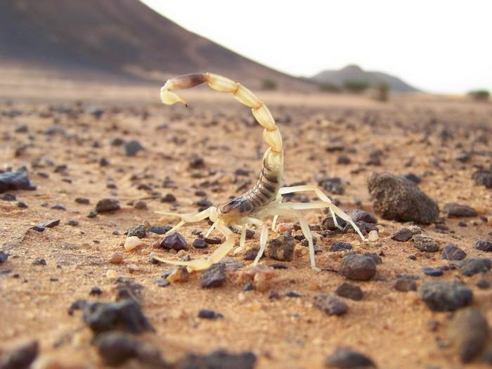 10 крошечных существ, которые могут убить человека