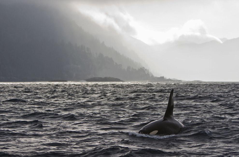 Красота китов в естественной среде обитания