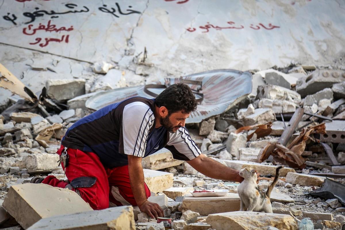 Человек-кот из Алеппо продолжает спасать бездомных животных