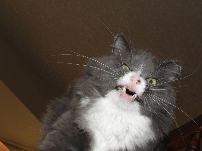 Забавные кошки в момент чихания