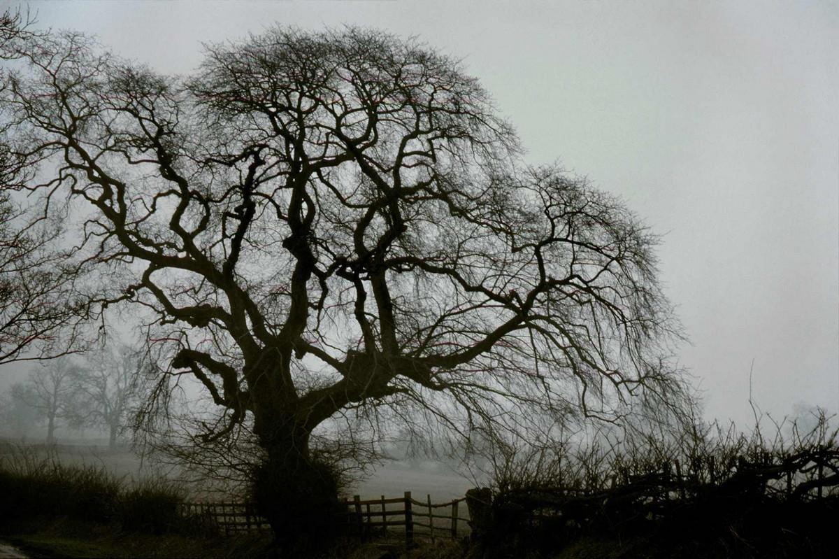 Портреты деревьев от Франка Хорвата