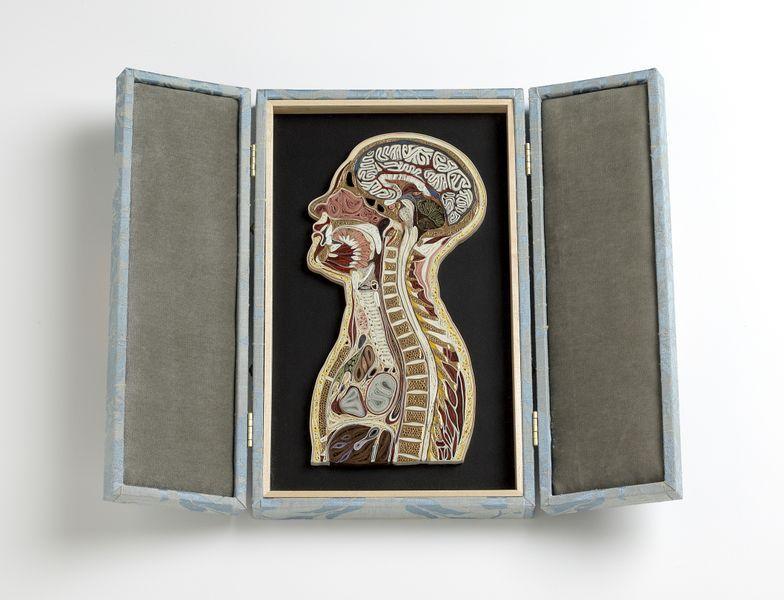 Красочные анатомические разрезы человека и животных из бумаги