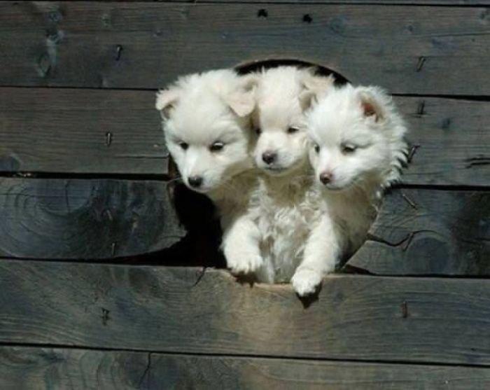Очаровательные щенки вызовут вашу улыбку