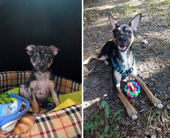 До и после: перевоплощения собак, которые обрели любящих хозяев