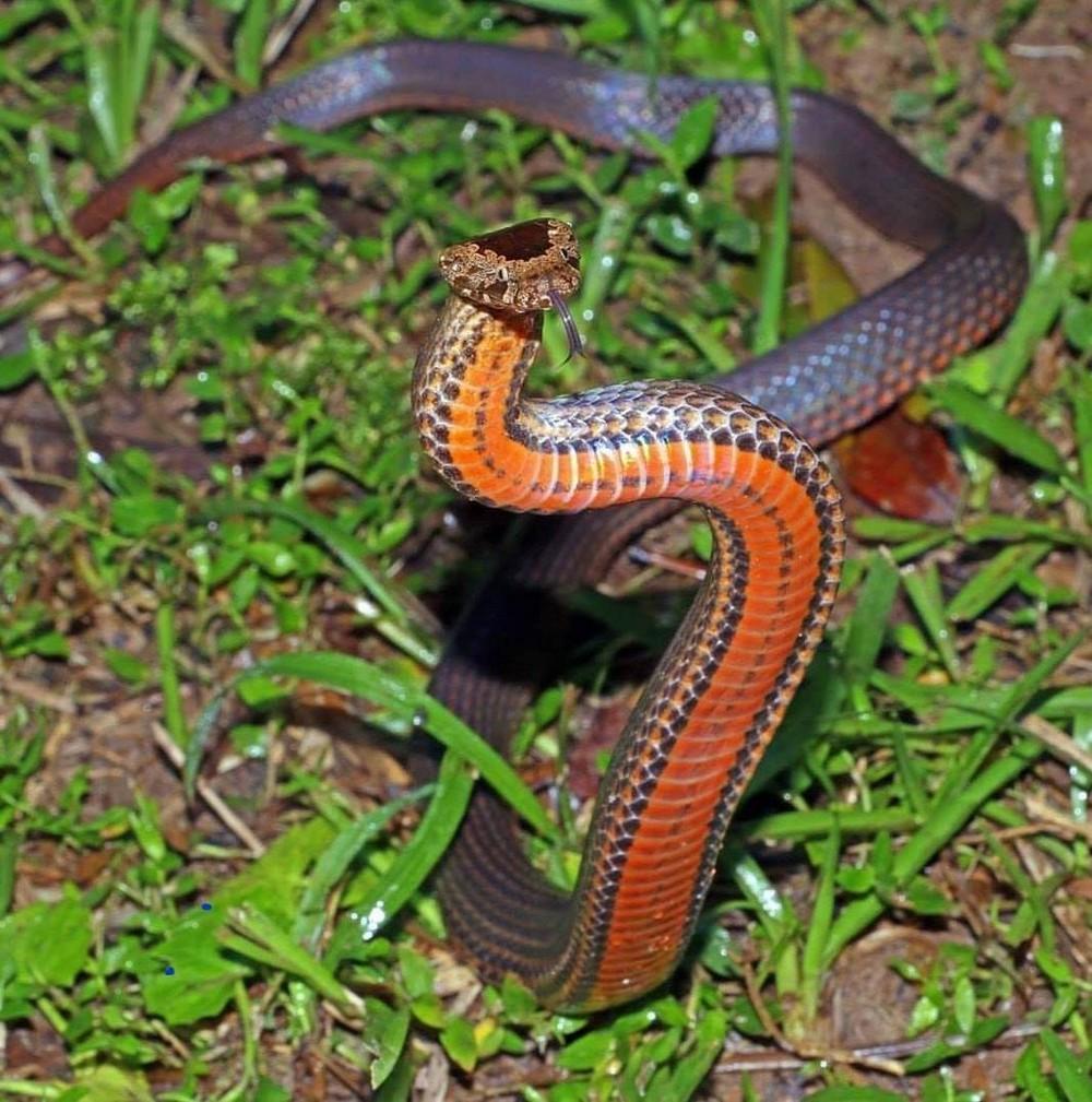 Профессиональные отлавливатели змей делятся снимками с работы