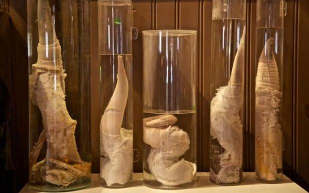 Странные и нестандартные музеи мира