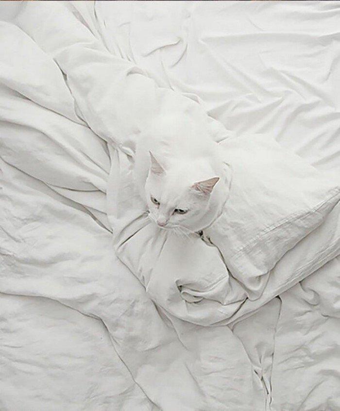 Котов не так уж легко найти