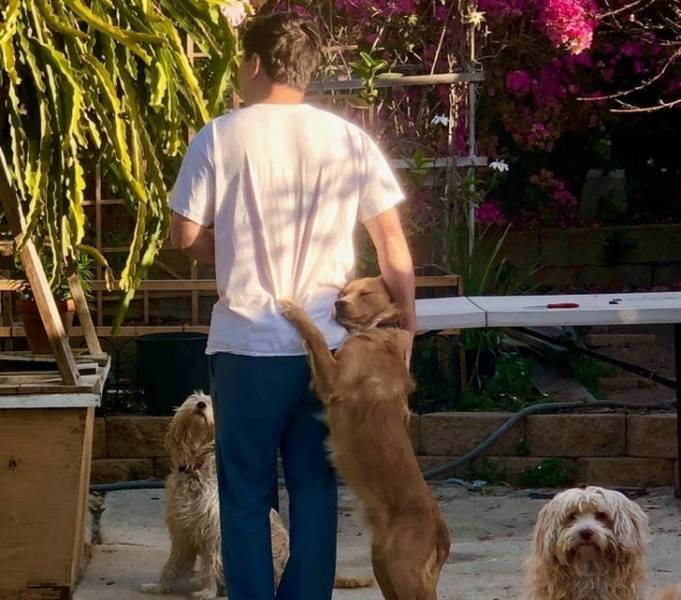 Домашние животные выражают любовь к своим хозяевам