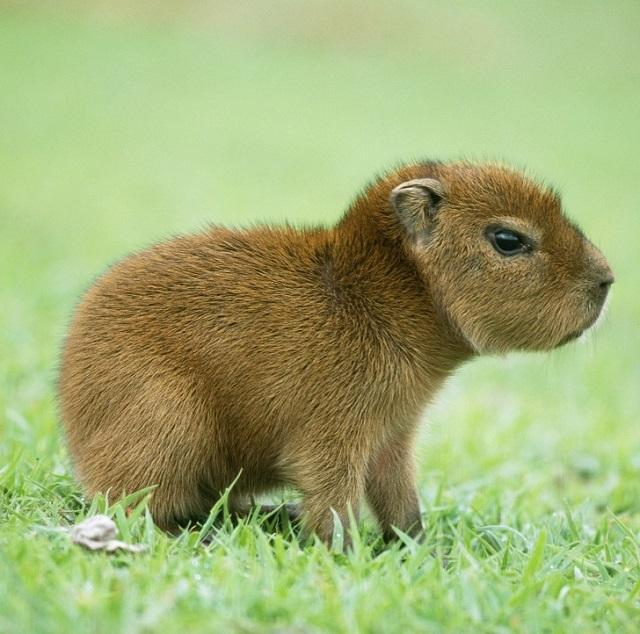 Милые детеныши животных, которых мало кто видел