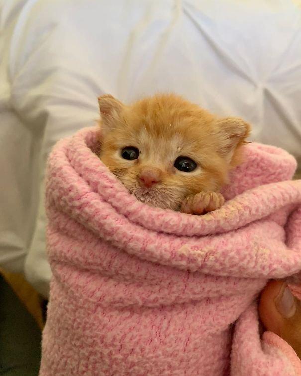 Очаровательные кошачьи буррито