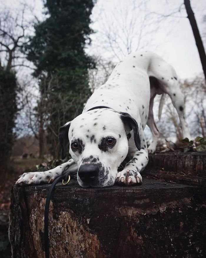 Собаки скрещенных пород