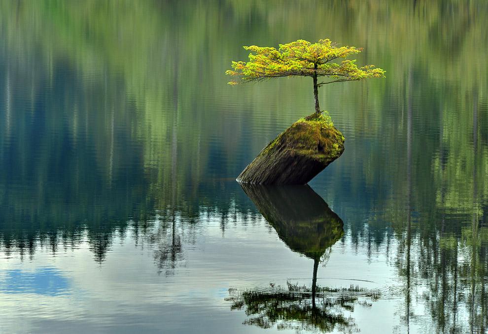 Сила природы и жизни