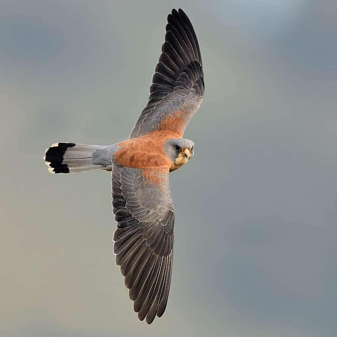 Волшебные портреты птиц от Рамаканта Кулкарни