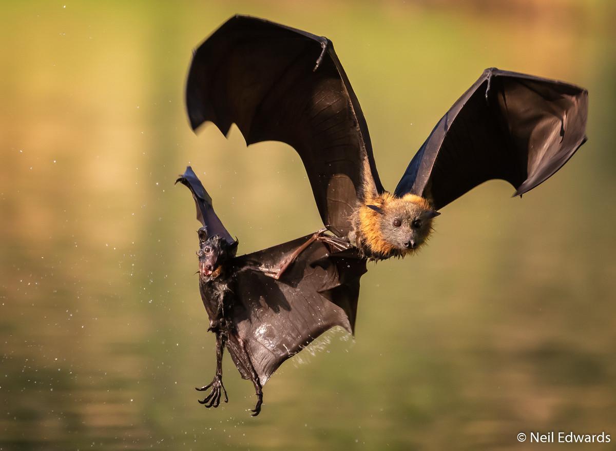 Победители фотоконкурса Australian Geographic Nature Photographer of the Year 2019