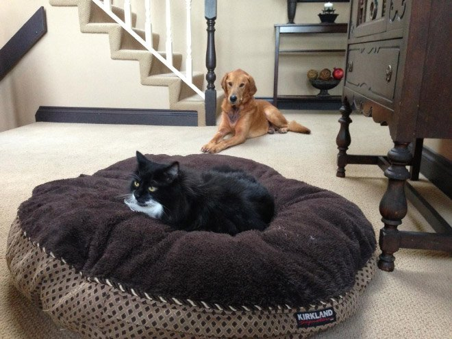 Уютные собачьи лежаки были созданы для кошек