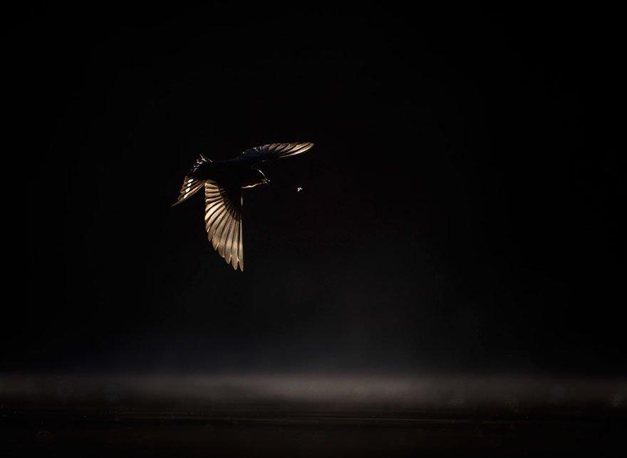 Победители фотоконкурса Bird Photographer of the Year 2019