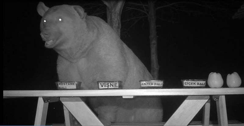 Пасечник дал медведям попробовать 4 вида меда