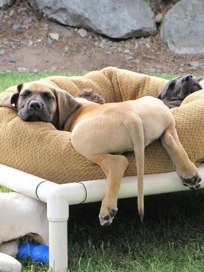 Пёсики заснули в смешных и невероятных позах