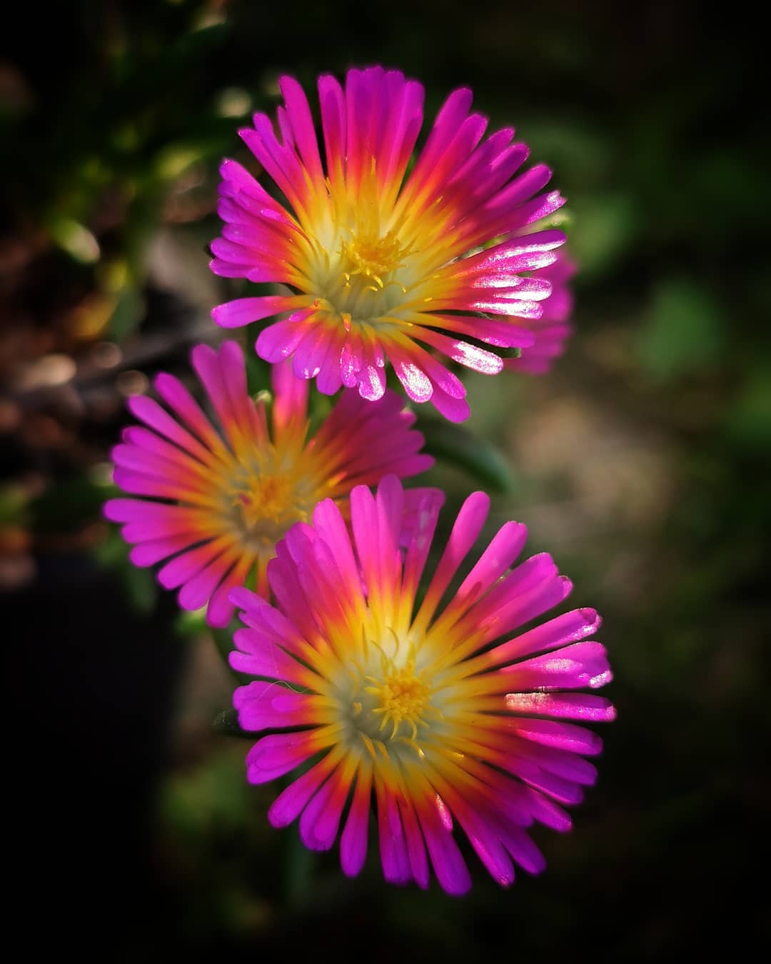Волшебная красота цветов Хорватии на снимках Кристины Войнович