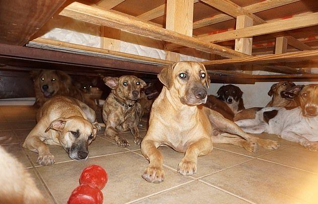 Женщина приютила 97 собак, чтобы спасти их от урагана Дориан