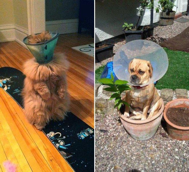 Милые коты и собаки в медицинских конусах