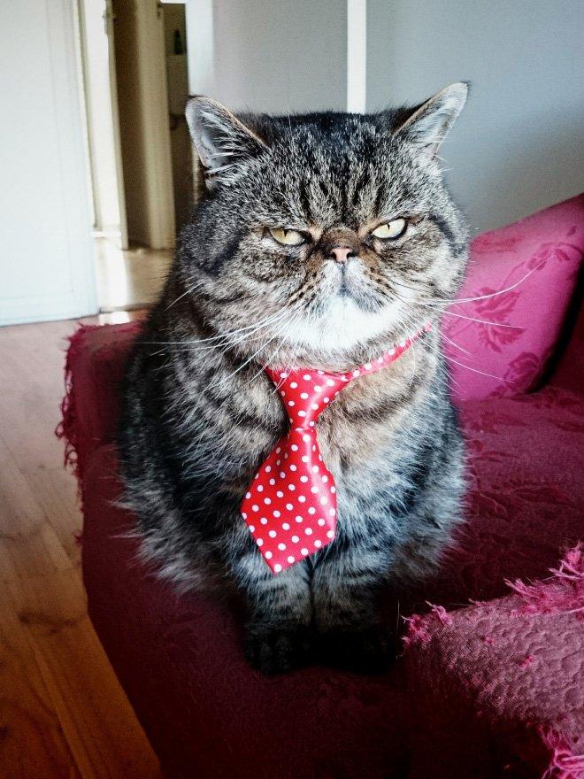 Очаровательные котики в галстуках выглядят по-деловому