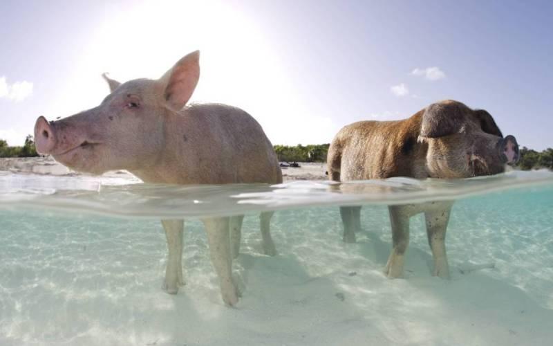 Острова, которые прославились благодаря животным