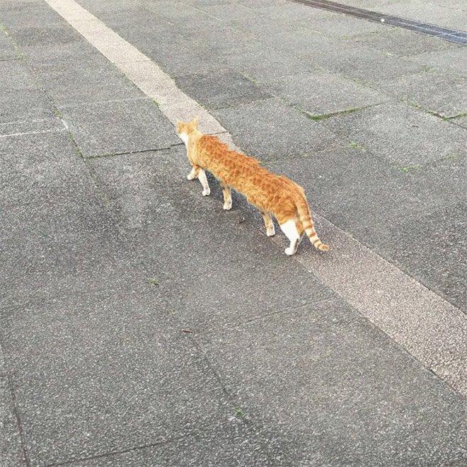 Неудачные панорамные фотографии с кошками