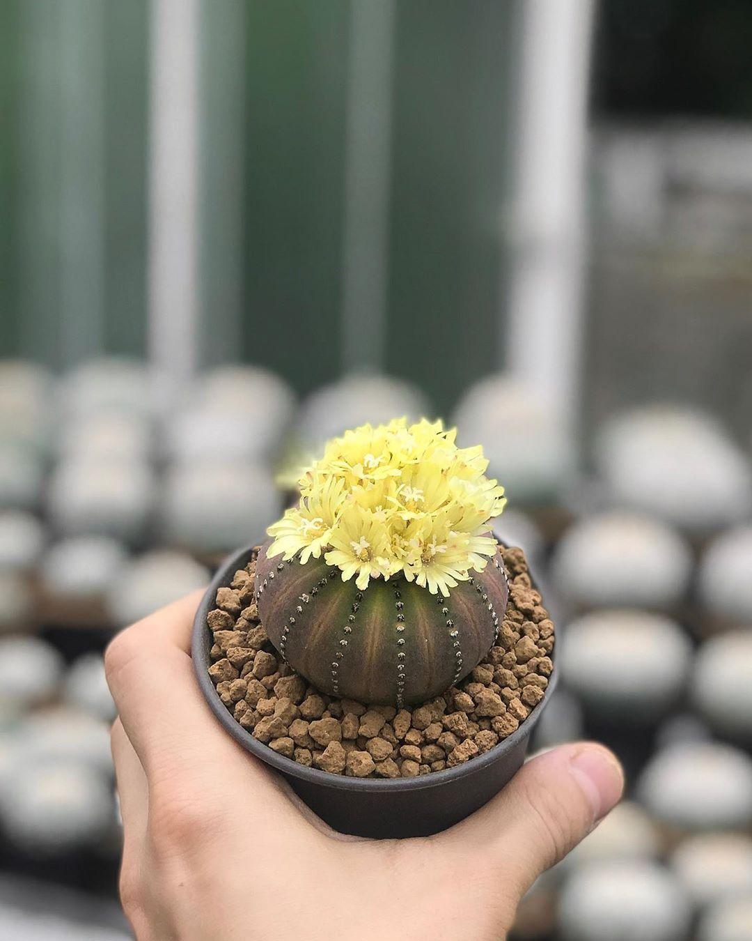 Кактусы и пустынные растения на снимках Ваширапола Дипрома