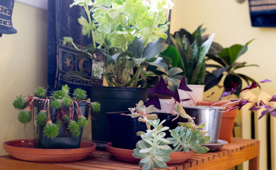 Как создать цветущий сад в небольшой квартире